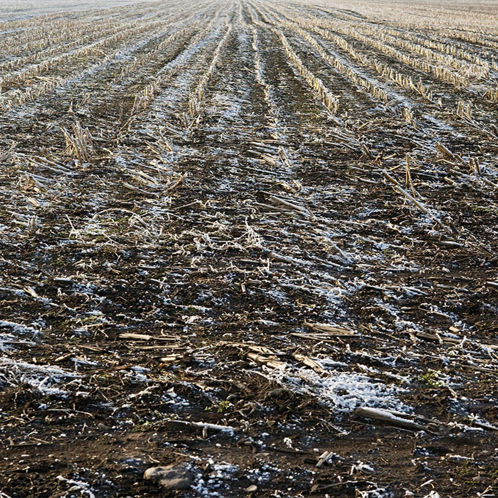 a field with corn stubble and melting snow on the field