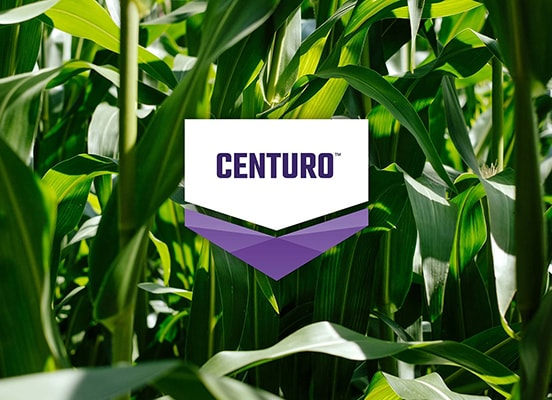CENTURO logo overlaid on an green corn crop